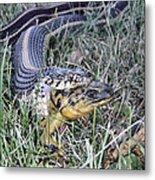 Snake With Legs Metal Print