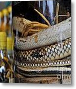 Snakes In Snake-flavoured Alcohol Bottles  Metal Print by Sami Sarkis