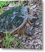 Snapper Eggs Metal Print