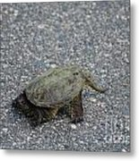 Snapping Turtle 3 Metal Print