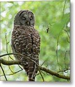 Snooze Time - Owl Metal Print