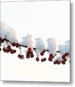 Snow And Berries Metal Print