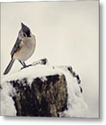 Snow Bird Metal Print