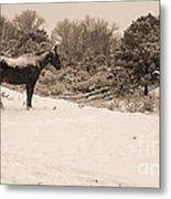Snow Bound Horse Metal Print