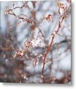 Snow Branch Metal Print