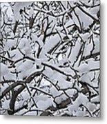 Snow Branches 2-1-15 Metal Print