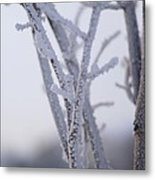 Snow Branches Metal Print by Krista Sidwell