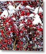 Snow Capped Berries Metal Print