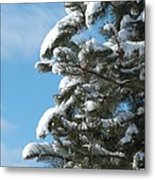 Snow-clad Pine Metal Print