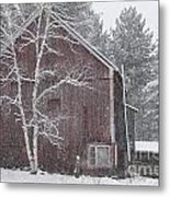 Snow Covered Birch Tree And A Red Barn. Metal Print