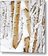 Snow Covered Birch Trees Metal Print by John Kelly