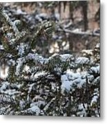 Snow Covered Branches Metal Print by Brett Geyer