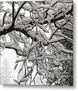 Snow Covered Branches Metal Print