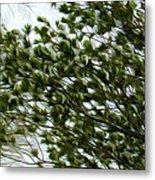 Snow Covered Pine Trees Metal Print