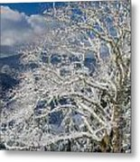 Snow Covered Tree And Winter Scene Metal Print
