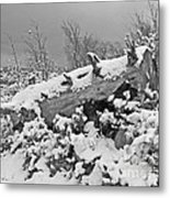 Snow Covered Tree Log In Black And White Metal Print
