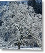 Snow Covered Winter Metal Print