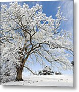 Snow Covered Winter Oak Tree Metal Print