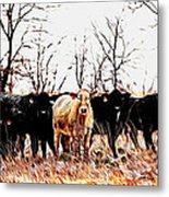 Snow Cows II Metal Print
