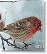 Snow Day Housefinch With Texture Metal Print