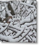 Snow Dove Metal Print
