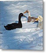 Snow Ducks Metal Print