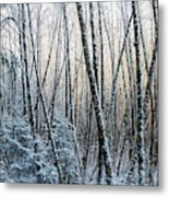 Snow Falls On The Alders  Astoria Metal Print