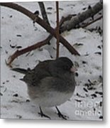 Snow Finch Metal Print