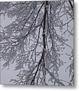 Snow Frosted Branches Metal Print