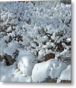 Snow Frosted Bush Metal Print