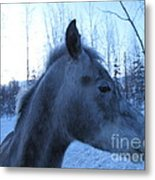 Snow Horse Whisperer  Metal Print