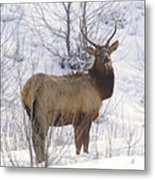 Snow In The Face  Metal Print