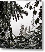 Snow In Trees At Narada Falls II Metal Print
