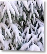 Snow Laden Branches Metal Print