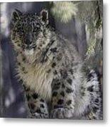 Snow Leopard 1 Metal Print