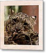 Snow Leopard 17 Metal Print