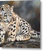 Snow Leopard Cub Metal Print