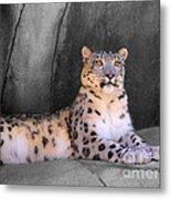 Snow Leopard II Metal Print