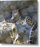 Snow Leopard    No.2 Metal Print