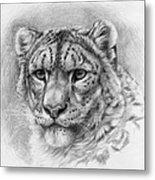 Snow Leopard - Panthera Uncia Metal Print