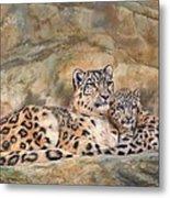 Snow Leopards Metal Print