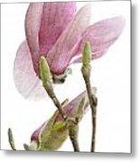 Snow Magnolia Painterly 1 Metal Print