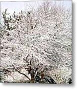 Snow Maple Metal Print