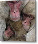 Snow Monkey And Young Metal Print