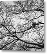 Snow On Bare Branches Metal Print