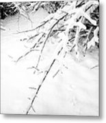 Snow On Branch Metal Print