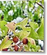 Snow On Green Leaves With Red Berries Metal Print