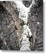 Snow On The Birch Metal Print