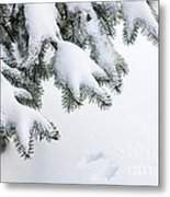 Snow On Winter Branches Metal Print by Elena Elisseeva