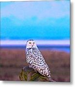 Snow Owl At Sunset Metal Print